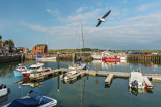 David Ross - Padstow harbour, Cornwall