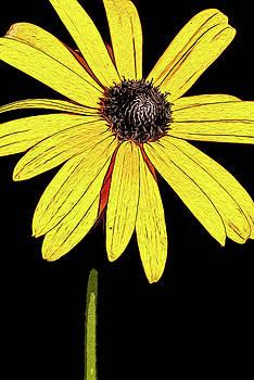 onyonet  photo studios - Painted Black-eyed susan portrait
