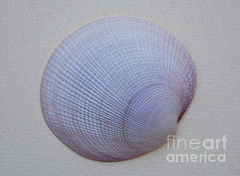 Painted Clam Shell No 26 by Skip Willits