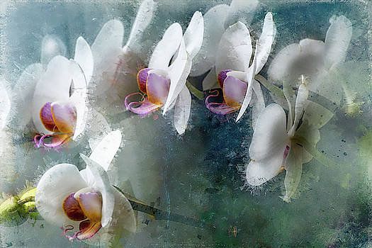 Painted Orchids by John Rivera