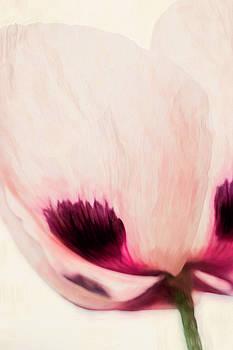 Painterly Poppy 2 by Cindi Ressler