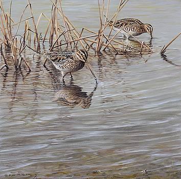 Pair of Snipe by Alan M Hunt by Alan M Hunt