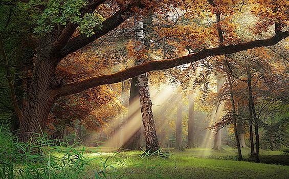 Palette des saisons  by Rob Visser