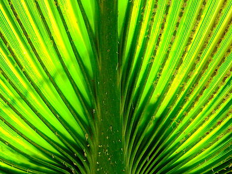 Palm Abstract by Arlane Crump