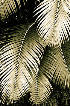Palm Fronds in Sepia by Kathy Yates