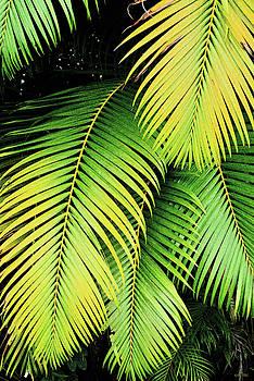 Palm Fronds by Kathy Yates