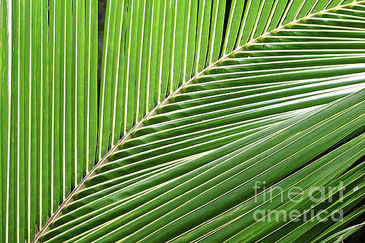 Palm leaf by Delphimages Photo Creations