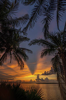 Palm Sunrise Marco 2 by Joey Waves