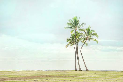 Palm Tree Cluster  by Ramona Murdock