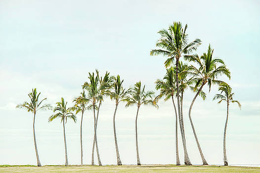 Palm Tree Horizon in Color by Ramona Murdock