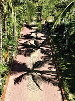 Palm Tree Lined Walkway by Deborah Kinisky