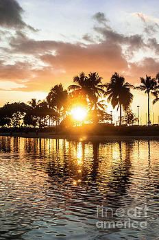 Palm tree sun by Micah May