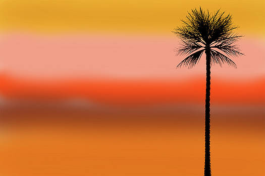 Palm Tree by Xavier Cardell