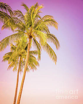 Palm trees and pink sky by Delphimages Photo Creations