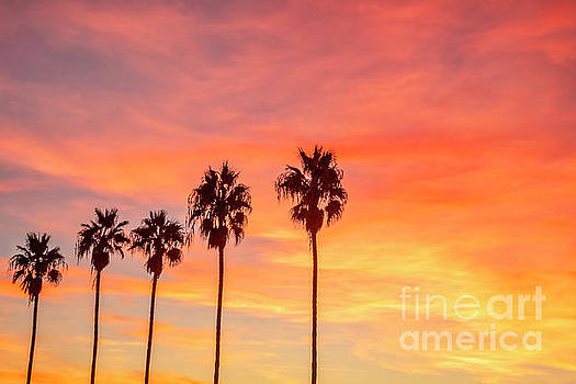 Palm trees at sunset in La Jolla, California by Julia Hiebaum