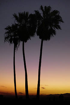 Palm Trees At Venice Beach by Art Spectrum