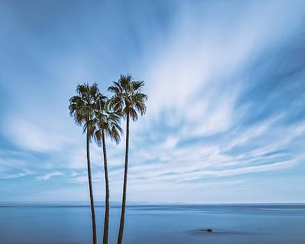 Palm Trees By The Blue Sky by Nazeem Sheik