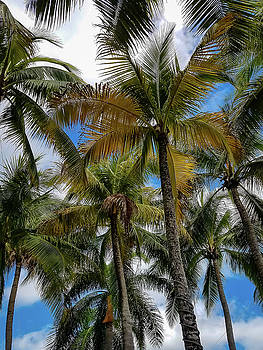 Palm Trees in Color by Michael Hills