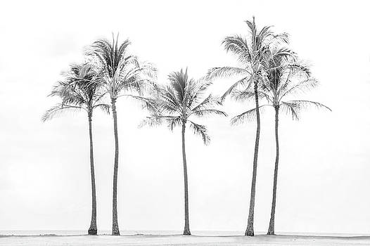 Palm Trees On the Beach In Black and White by Ramona Murdock