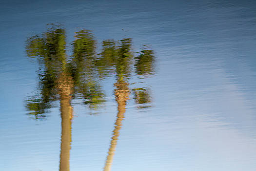 Palm Trees Reflection by Stephanie McDowell