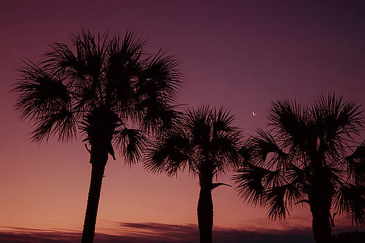 Palm Trees Sunset by Stephanie McDowell