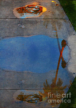 Palms and Puddles by Katherine Erickson