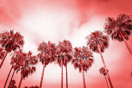 Palms of Venice beach in Los Angeles toned by living coral color by Natalia Macheda