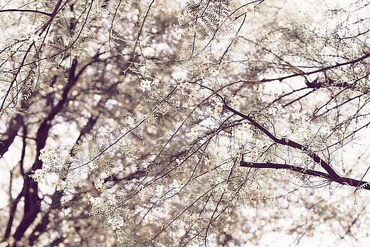 Palo Brea Blossoms on Tree in Lavender Dawn by Colleen Cornelius