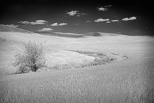 Palouse Tree II by Jon Glaser