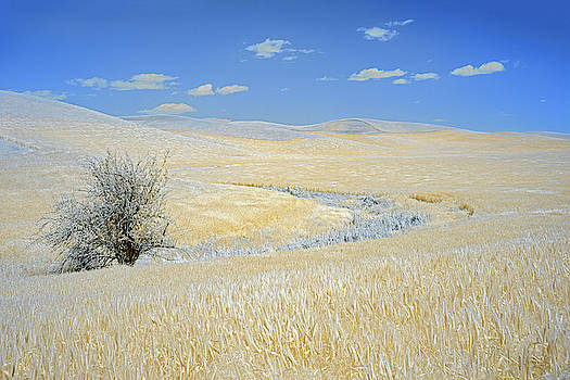 Palouse Tree by Jon Glaser