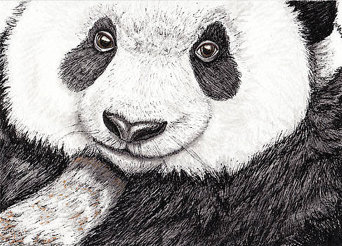 Panda Bear by Heather Stinnett