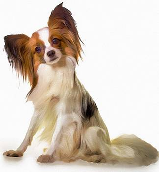Papillon, portrait by Vincent Monozlay