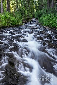 Paradise River by Sharon Seaward
