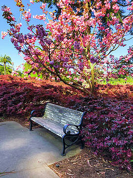 Park Bench with Spring Blossoms by Bonnie Follett
