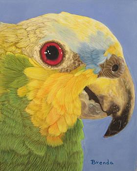 Parrot by Brenda Maas