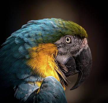 Parrot by Jeffrey Klug