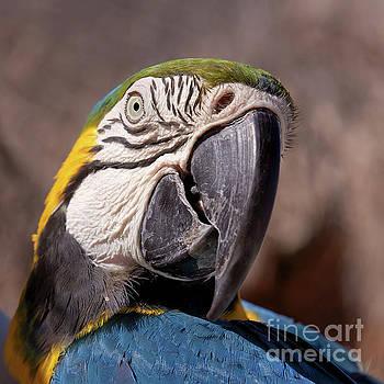 Tatiana Travelways - Parrot portrait