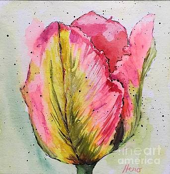 Parrot Tulip 3 by Marcia Hero
