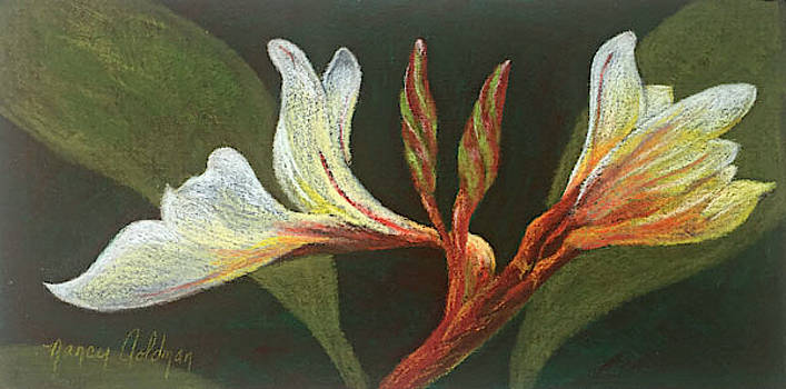Pastel Plumeria by Nancy Goldman