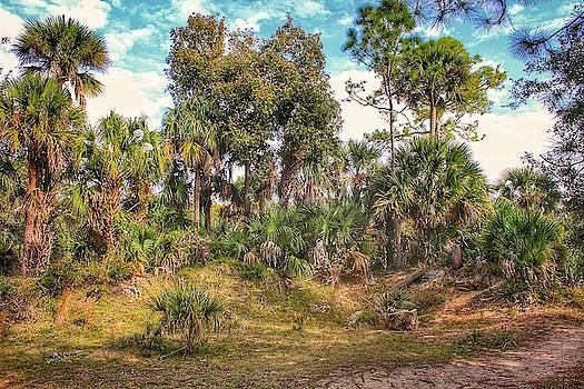 Patch of Palms by Scott Gunnerson