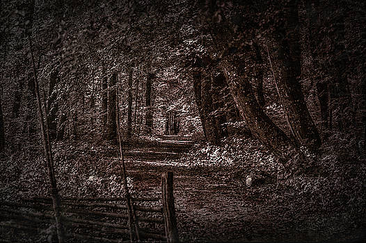 Path In Forest #i0 by Leif Sohlman