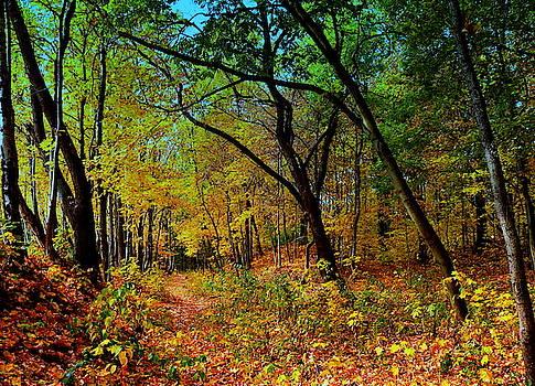 Henryk Gorecki - Path in the autumn forest