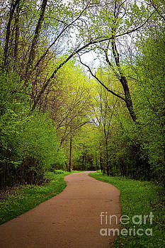 Path in the Forest by Susan Rydberg