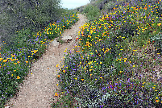 Path Through the Desert Wildflowers by David T Wilkinson