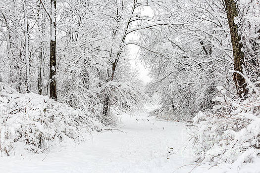 Pathway into the Snow by Terri Morris