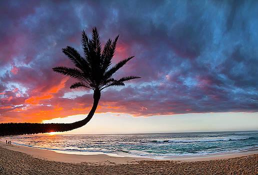 Paumalu Fire Palm by Sean Davey