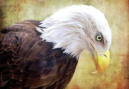 Peace  by Eagle Finegan