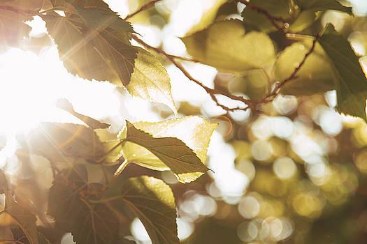Peaceful morning by Hyuntae Kim
