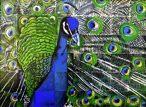 Peacock by Dustin Miller