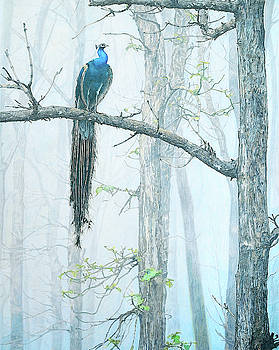 Peacock in Mist by Paramjeet Kaur